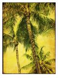 Palm Series III