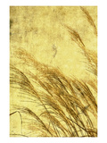 Grass Series I