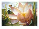 Lotus Landing