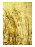 Grass Series III