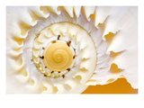 Sea Shell Abst No4
