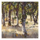 Woodlands Shadow