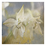 White Flower 5