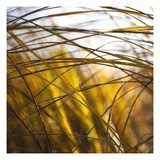Grass Study 6