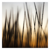 Grass Abstract 3