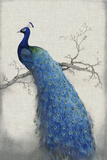 Peacock Blue II Reproduction d'art par Tim O'toole