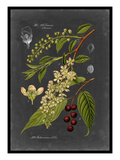 Midnight Botanical II Reproduction d'art par Vision Studio