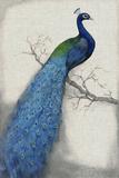 Peacock Blue I Reproduction d'art par Tim O'toole