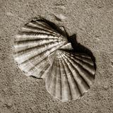 Seashells V