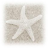 In the Sand V Reproduction d'art par Jim Christensen