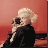 Marilyns Puppy