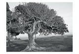 The One Tree BW