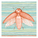 Summer Stripe Beetle 2