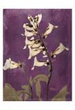 Golden Foxglove
