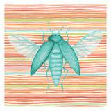 Summer Stripe Beetle 1
