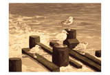 Bradley Beach Sea Gulls Sepia 1