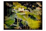Lily Ponds II
