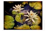 Lily Ponds V