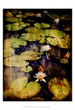 Lily Ponds VIII