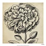 Graphic Floral V