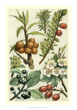 Fruits & Foliage III