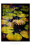 Lily Ponds IX