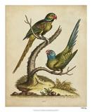 Edwards Parrots V