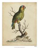 Edwards Parrots III