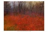 Red Grass I