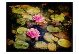Lily Ponds I