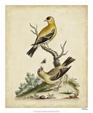 Edwards Bird Pairs III