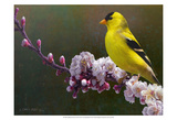 Goldfinch Flowers