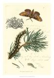 Naturalist's Montage III
