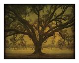 Manresa Oak Study