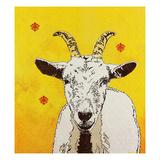 Goat 33