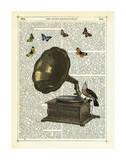 Gramophone  Bird & Butterflies