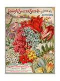 John A. Salzer Seed Co. Autumn 1895 Giclée