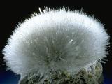 MineralCalendar: Mesolite Poona  India