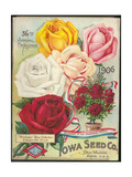 Seed Catalog Captions (2012): Iowa Seed Co Des Moines  Iowa 36th Annual Catalogue  1906