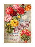 John Lewis Child's 1898 Fall Catalogue: Bulbs