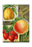 Seed Catalogues: Storrs and Harrison  Co Painesville  OH  1893