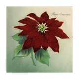 Christmas card with Poinsettia Merry Christmas  National Museum of American History