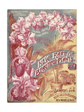Seed Catalog Captions (2012): Siebrecht and Son  New York  New York New  Rare and Beautiful Plants