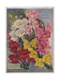 Giant Snapdragons from the Perry Seed Company Giclée