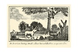 American Having Struck by a Bear  from Lewis and Clark's Expedition Journal  1803-6
