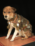 National Postal Museum: Owney