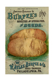 Seed Catalogues: W Atlee Burpee and Co Abridged Catalogue of Novelties and Specialties in Seeds