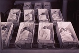 Newborns in the a Nursery of Provident Hospital in Chicago  Illinois  1942