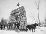 Big Load of Logs on a Horse Drawn Sled in Michigan  Ca 1899