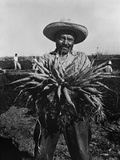Mexican-American Carrot Puller in Edinburg  Texas February 1939 Photograph by Russell Lee
